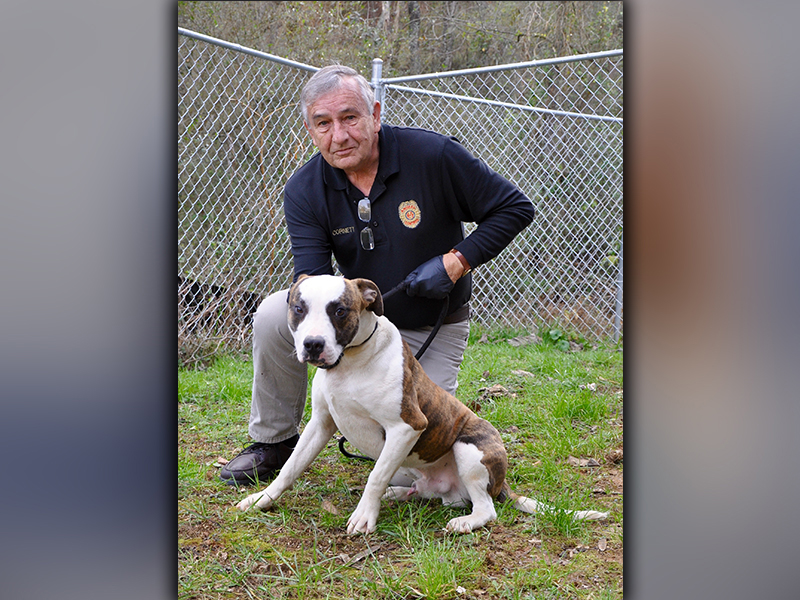 This male, Bulldog mix was picked up in Morganton November 23. He has a short, white coat with brindle patches. He's a good boy. View him using intake number 325-20. He is shown with Animal Control Officer J.R. Cornett.