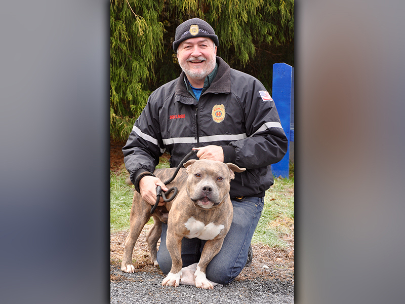 This male Bulldog was picked up in Lakewood January 2, 2021. He is built like a Bully and has a light brown brindle coat. He is a sweetheart. View him using intake number 003-21. He is shown with Animal Control Manager John Drullinger.